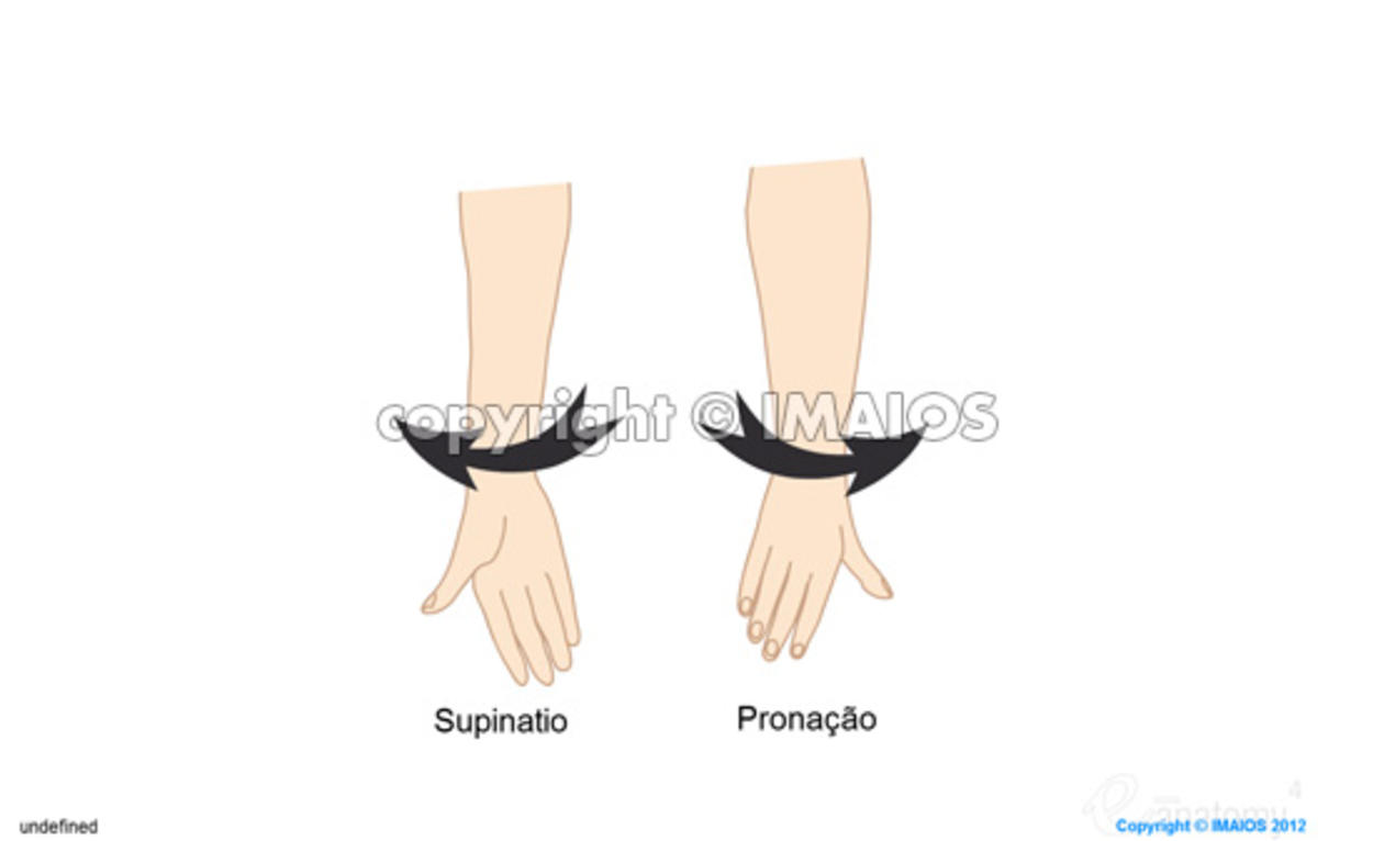Pronation/Supination : Drawings