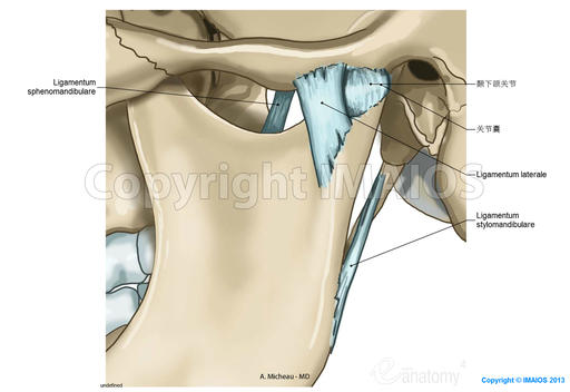 Temporomandibular joint-Cranial synovial joints:Articular disc, Lateral ligament, Superior synovial membrane, Sphenomandibular ligament